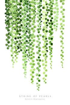 Illustrazione Watercolor string of pearls illustration