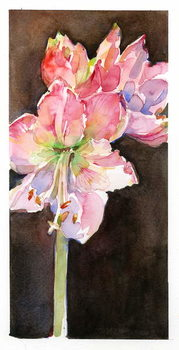Amaryllis with brown background, 2015, - Stampe d'arte