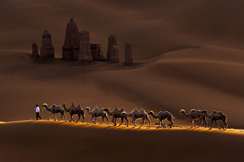 Fotografia d'arte Castle and Camels
