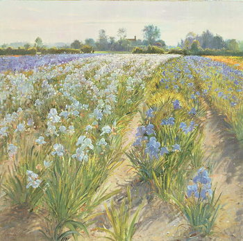 Blue and White Irises, Wortham Reproducere