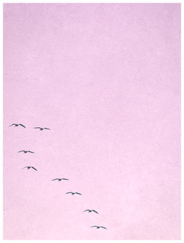 Ilustrare borderpinkbirds