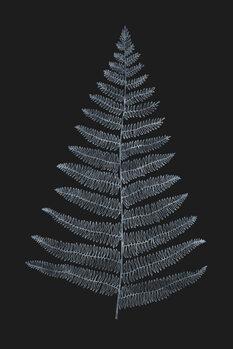 Ilustrare Botanica Minimalistica Bleu