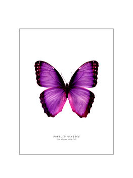 Ilustrare butterfly 2