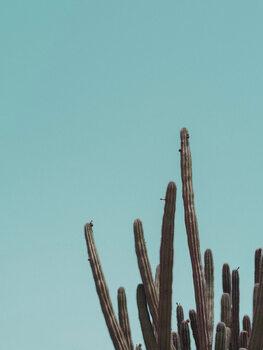 Ilustrare Cactuscorner green