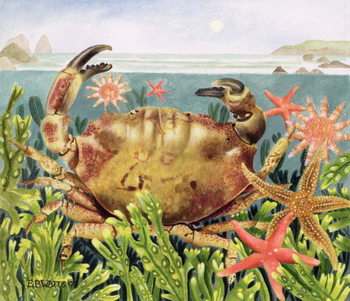 Furrowed Crab with Starfish Underwater, 1997 Reproducere