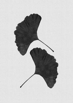 Ilustrare Ginkgo Leaf Black & White II
