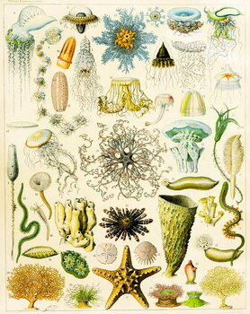 Illustration of Marine organisms c.1923 Reproducere