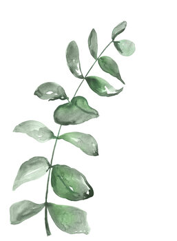 Ilustrare Watercolor greenery branch