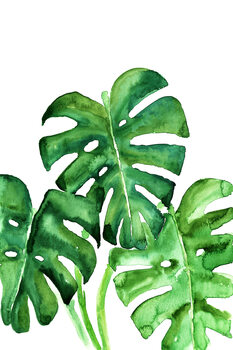 Ilustrare Watercolor monstera leaves
