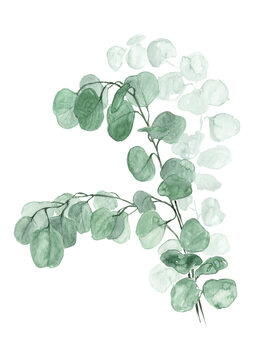 Ilustrare Watercolor silver dollar eucalyptus