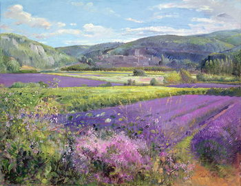 Lavender Fields in Old Provence Reproducere
