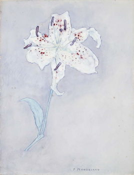 Lily, c.1920-25 Reproducere