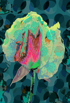 Tea Rose 4 Reproducere