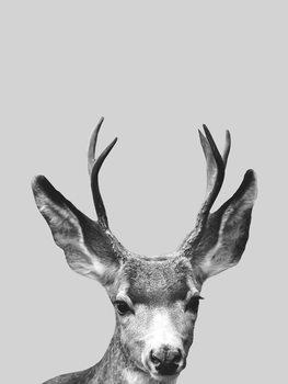 Ilustracija Grey deer