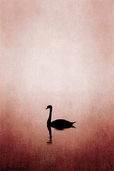 Ilustracija Swan Lake