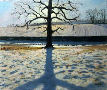 Tree and Shadow, Calke Abbey, Derbyshire Reprodukcija