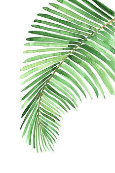 Ilustracija Watercolor palm leaf
