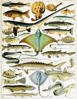Illustration of  Fish  c.1923 Reprodukcija