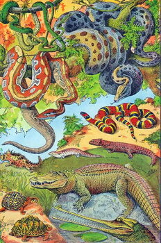 Illustration of  Reptiles  c.1923 Reprodukcija