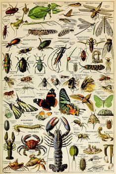 Illustration of  various Invertebrates  c.1923 Reprodukcija
