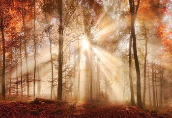 Fotomural  Autumn Trees Forest Sunshine