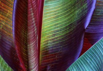 Fotomural  Banana Skin