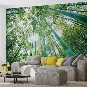 Fotomural  Bosques bosques