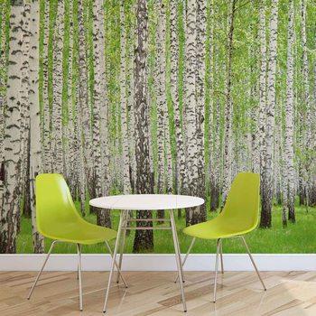 Fotomural Bosques y Bosques