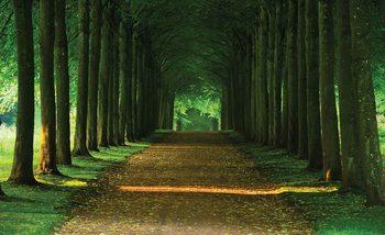 Fotomurale  Camino arboles Bosque Naturaleza