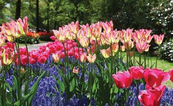 Fotomurale  Campo de flores