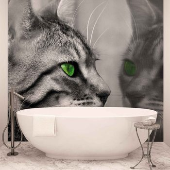 Fotomurale Cat Kitten