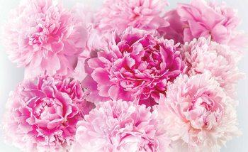 Fotomurale  Claveles rosados