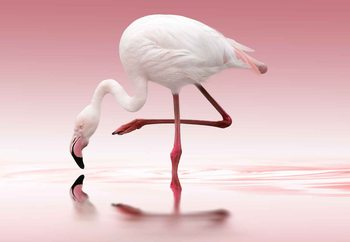 Fotomural  Flamingo