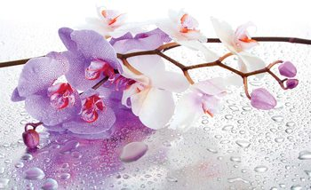 Fotomural Flores Orquideas Naturaleza Gotas