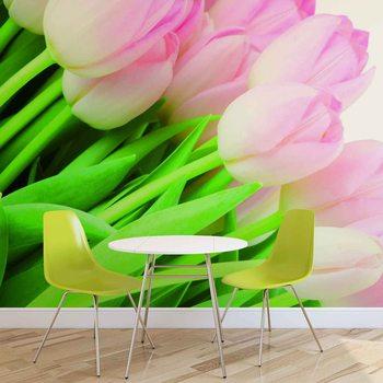 Fotomural Flores Tulipanes Naturaleza