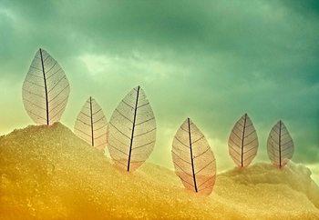 Fotomural Fragile Leaves