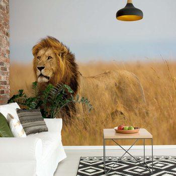Fotomural Lion