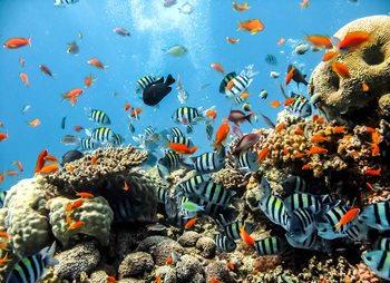 Fotomural  Mar Corales de pescado
