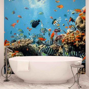 Fotomurale Mar Corales de pescado