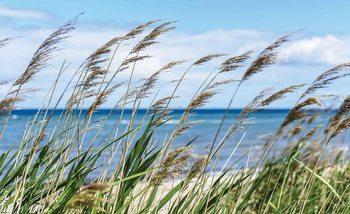 Fotomural  Playa Mar Arena Naturaleza