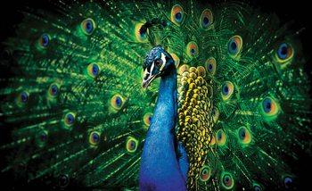 Fotomurale  Plumas de pajaro pavo real