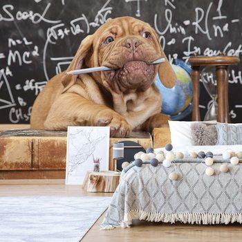 Fotomural Puppy Professor