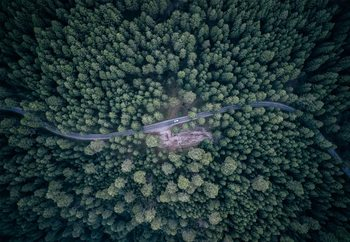 Fotomural  Road Through The Forest