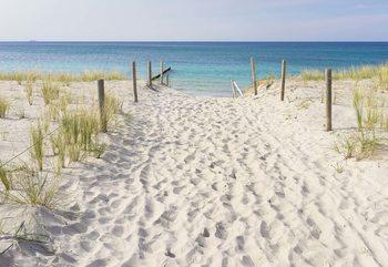 Fotomural Sandy Beach Path To The Sea Coastal