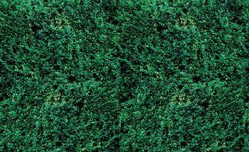 Fotomurale  Textura de hierba