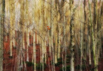 Fotomural The Forest Of Ghosts