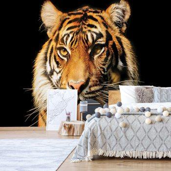 Fotomural Tiger