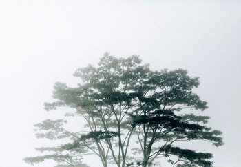 Fotomural Timor-Leste