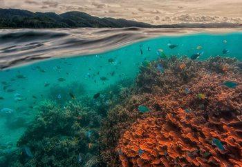Fotomural  Uri Marine Reserve