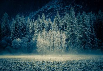 Aspen Grouping - Yosemite Valley Fototapet